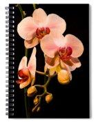 Orchids Spiral Notebook