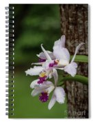 Orchids On A Tree Spiral Notebook