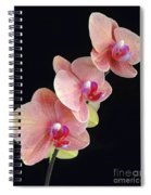 Orchids Reach For The Rainbow Spiral Notebook