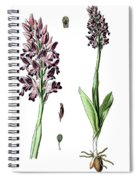 Orchis Militaris, The Military Orchid Spiral Notebook