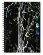 Oregon's Crater Lake Tree Spiral Notebook