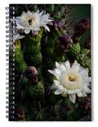 Organ Pipe Cactus Flowers  Spiral Notebook