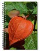 Ornamental Physalis Spiral Notebook