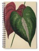 Ornamental Yam  Dioscorea Discolor Spiral Notebook