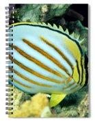 Ornate Butterflyfish Spiral Notebook