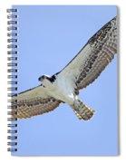 Osprey 1-30-11 Spiral Notebook