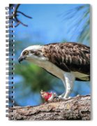 Osprey Breakfast Break Spiral Notebook