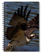 Osprey Catching A Fish Spiral Notebook