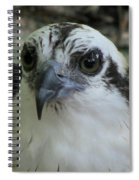 Osprey Portrait Spiral Notebook