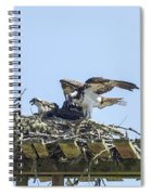 Osprey Family Portrait No. 1 Spiral Notebook