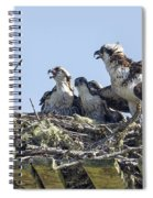 Osprey Family Portrait No. 2 Spiral Notebook