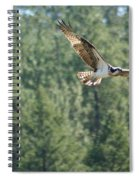 Osprey In Flight 6 Spiral Notebook