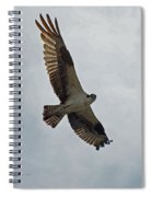 Osprey In Flight Spiral Notebook