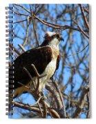 Osprey In Spring Spiral Notebook