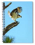 Osprey Landing Spiral Notebook