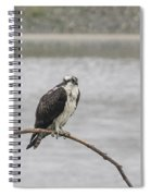 Osprey Looking Over The Rogue River Spiral Notebook