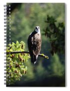 Osprey On Branch Spiral Notebook