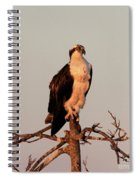 Osprey On The Caloosahatchee River In Florida Spiral Notebook