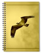 Osprey Soaring Into Golden Sunlight Spiral Notebook