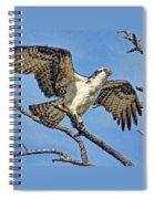 Osprey Wing Stretch Spiral Notebook