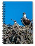 Osprey With Chicks Spiral Notebook
