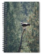 Osprey With Fish 2 Spiral Notebook