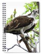 Osprey With Snack Spiral Notebook