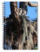 Ospreys In Spanish Moss Nest Spiral Notebook