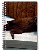 Otter Like It Spiral Notebook