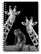 Our Wise Little Friend - Monkey And Giraffes In Black And White Spiral Notebook