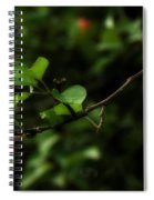 Out On A Limb  A Tempting Photograph Of A Tasty Ripe Red Apple On A Tree  Spiral Notebook