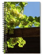 Overhead Grape Harvest - Summertime Dreaming Of Fine Wines Spiral Notebook