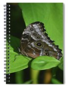 Owl Butterfly With Fantastic Distinctive Eyespots  Spiral Notebook