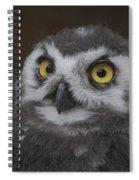 owl Spiral Notebook