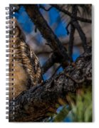 Owlet In A Fir Tree Spiral Notebook