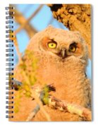 Owlet In A Spring Sunrise Spiral Notebook