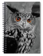 Owls Eye Spiral Notebook