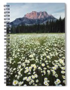 Ox-eyed Daisies And Cascade Mountain Spiral Notebook