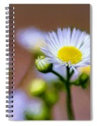 Oxeye Daisy - Paint Spiral Notebook