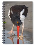 Oystercatcher Eating Clam Spiral Notebook