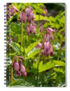Pacific Bleeding Heart 2  Spiral Notebook