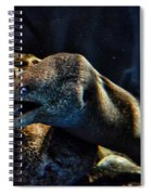 Pacific Moray Eel Spiral Notebook
