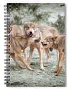 Pack Dispute Spiral Notebook