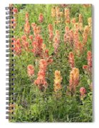 Paintbrush Beauties Spiral Notebook