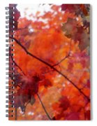 Painted Branches Abstract 5 Spiral Notebook