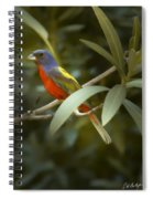 Painted Bunting Male Spiral Notebook