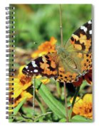 Painted Lady On Zinnia Spiral Notebook