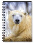 Painted Polar Bear  Spiral Notebook