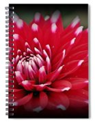Painted Tips Spiral Notebook