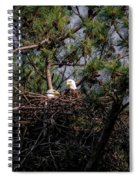 Pair Of Bald Eagles In Nest Spiral Notebook